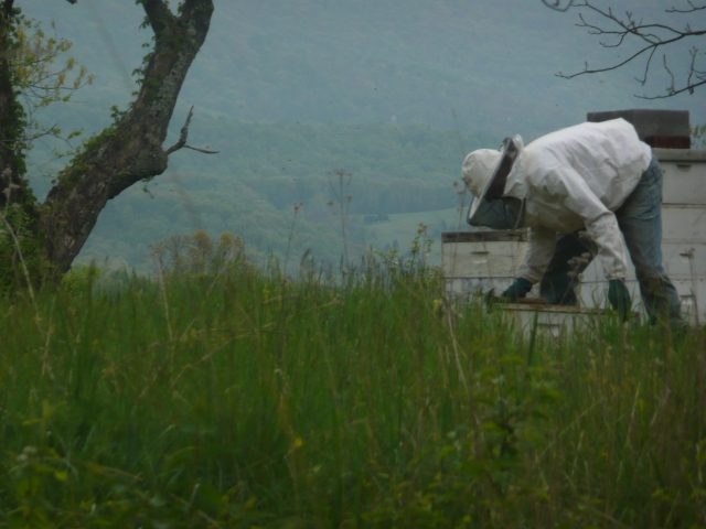 Beekeeping3 - Copy