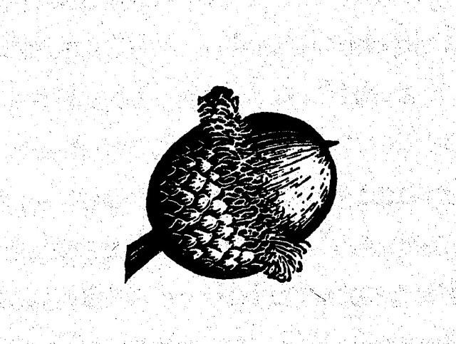 Acorn,Peattie