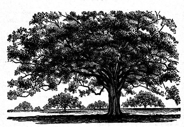 Oak,Peattie